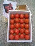 画像3: 果物の様な美味しいフルーツトマト 小箱1K入り【税込み・送料別】 (3)