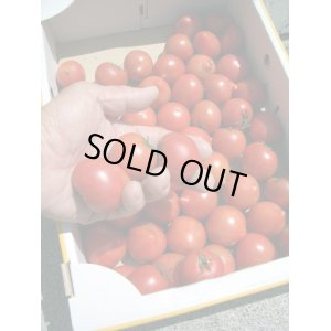 画像1: フルーツトマト 自宅用 (B 品)