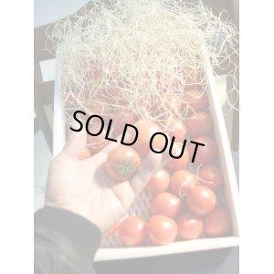 画像3: 果物の様なトマト「フルーツトマト」 2K入り【税込み・送料別】
