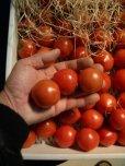画像2: 果物の様なトマト「フルーツトマト」 2K入り【税込み・送料別】      (2)