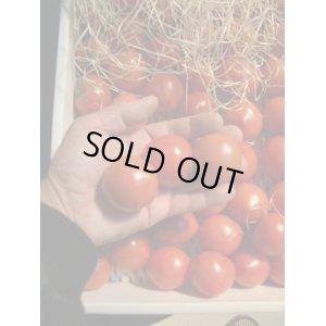画像2: 果物の様なトマト「フルーツトマト」 2K入り【税込み・送料別】