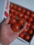 画像1: 果物の様なトマト「フルーツトマト」 2K入り【税込み・送料別】      (1)