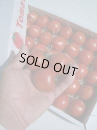 果物の様なトマト「フルーツトマト」2K入り【税込み・送料別】