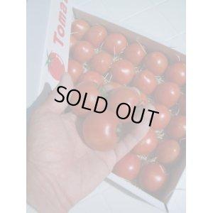 画像1: 果物の様なトマト「フルーツトマト」 2K入り【税込み・送料別】