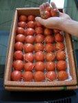 画像4: 果物の様なトマト「フルーツトマト」2K入り【税込み・送料別】      (4)
