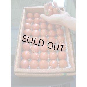画像4: 果物の様なトマト「フルーツトマト」 2K入り【税込み・送料別】